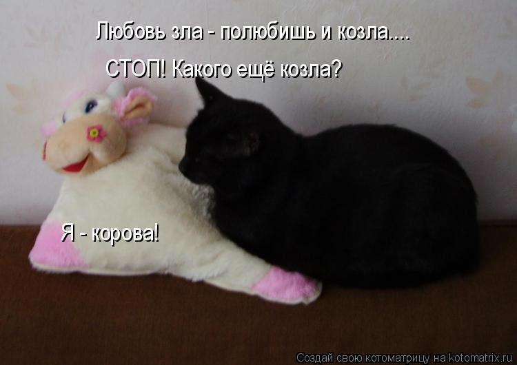 Котоматрица: Любовь зла - полюбишь и козла.... СТОП! Какого ещё козла? Я - корова!
