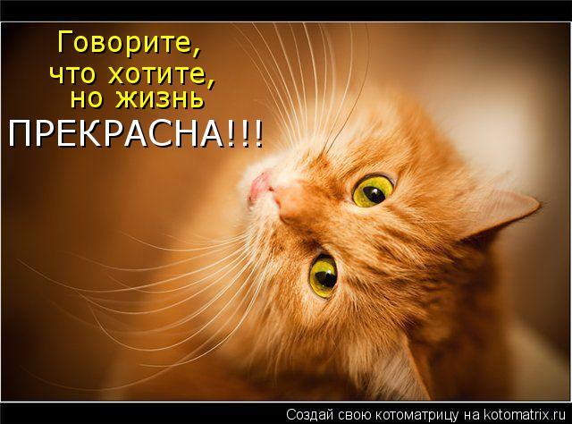 Котоматрица: Говорите, что хотите,  но жизнь ПРЕКРАСНА!!!
