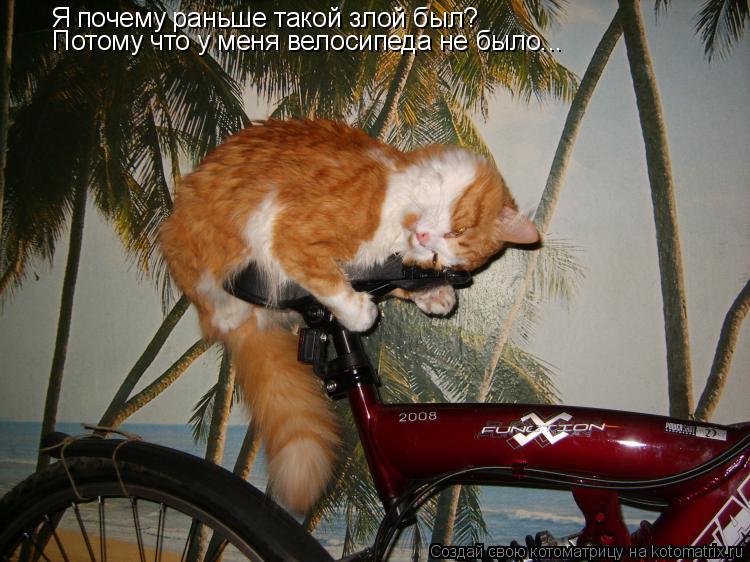 Котоматрица: Я почему раньше такой злой был? Потому что у меня велосипеда не было...