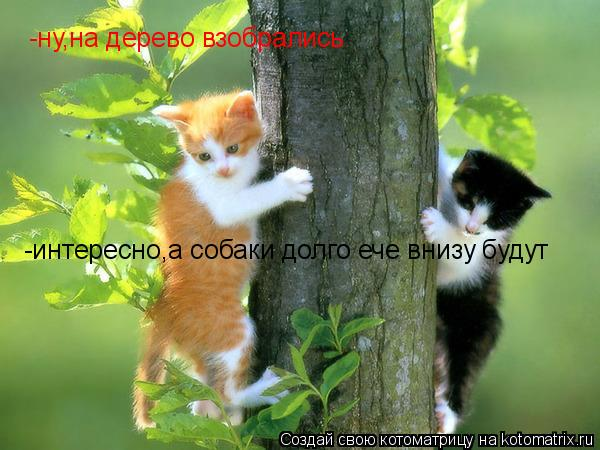 Котоматрица: -ну,на дерево взобрались -интересно,а собаки долго ече внизу будут