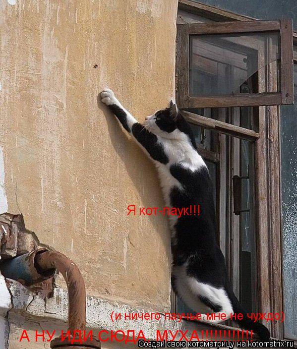 Котоматрица: Я кот-паук!!! (и ничего паучье мне не чуждо) А НУ ИДИ СЮДА, МУХА!!!!!!!!!!!!