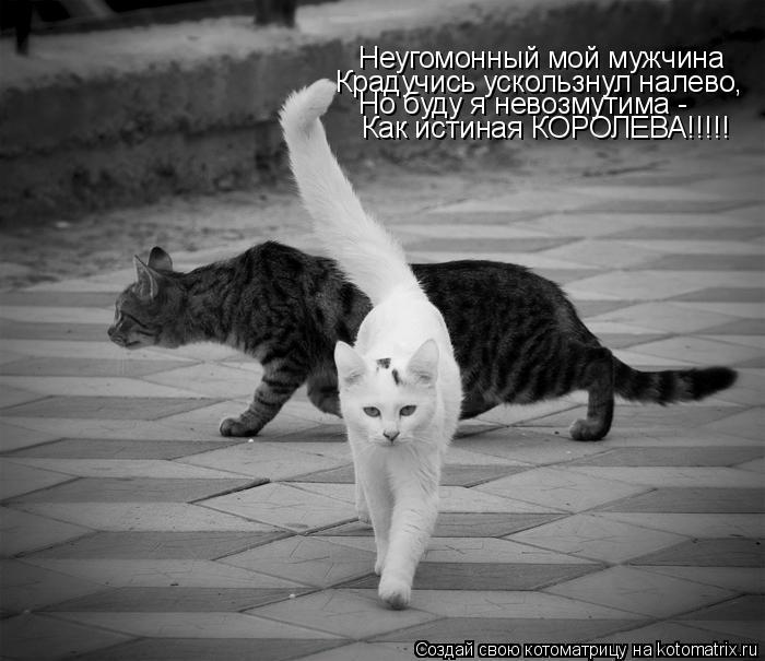 Котоматрица: Неугомонный мой мужчина Крадучись ускользнул налево, Но буду я невозмутима - Как истиная КОРОЛЕВА!!!!!