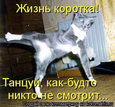 Котоматрица: Жизнь коротка! Танцуй, как-будто никто не смотрит...