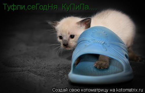 Котоматрица: Туфли,сеГодНя  КуПиЛа....