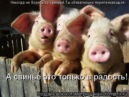 Котоматрица: Никогда не борись со свиньей.Ты обязательно перепечкаешься. Никогда не борись со свиньей.Ты обязательно перепечкаешься. А свинье это тольк