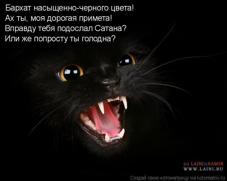 Котоматрица: Бархат насыщенно-черного цвета! Ах ты, моя дорогая примета! Вправду тебя подослал Сатана? Или же попросту ты голодна?