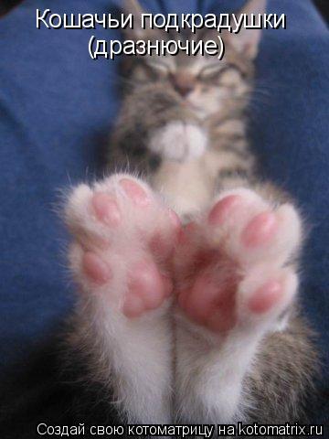 Котоматрица: Кошачьи подкрадухи Кошачьи подкрадушки  (дразнючие)