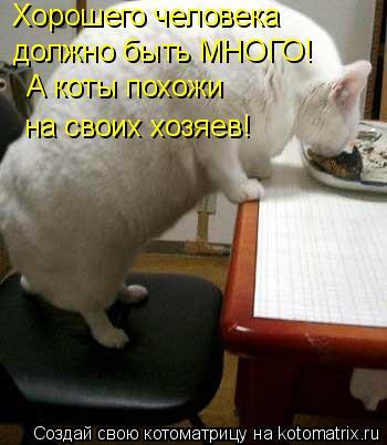 Котоматрица: Хорошего человека должно быть МНОГО! А коты похожи на своих хозяев!