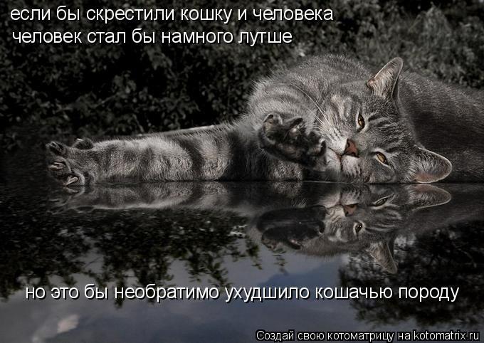 Котоматрица: если бы скрестили кошку и человека человек стал бы намного лутше но это бы необратимо ухудшило кошачью породу