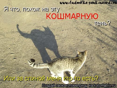 Котоматрица: Я что, похож на эту  КОШМАРНУЮ  тень? Или за спиной меня кто-то есть?
