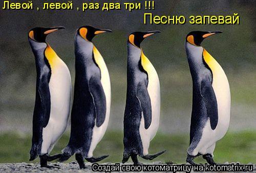 Котоматрица: Левой , левой , раз два три !!! Песню запевай