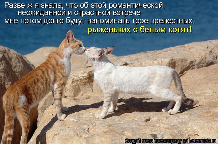 Котоматрица: Разве ж я знала, что об этой романтической, неожиданной и страстной встрече рыженьких с белым котят! мне потом долго будут напоминать трое п