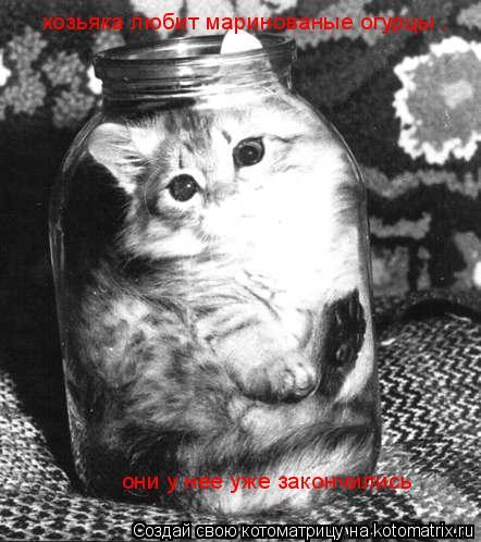 Котоматрица: хозьяка любит маринованые огурцы . они у нее уже закончились