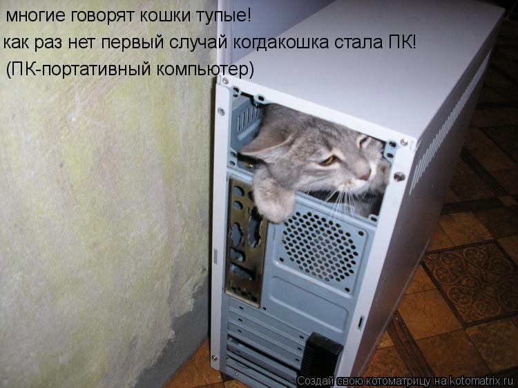 Котоматрица: многие говорят кошки тупые! как раз нет первый случай когдакошка стала ПК! (ПК-портативный компьютер)