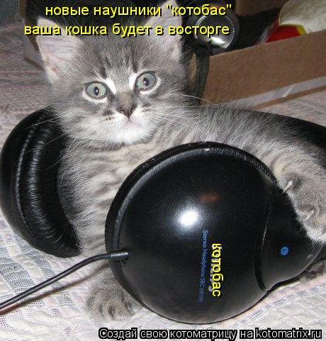 """Котоматрица: котобас новые наушники """"котобас"""" ваша кошка будет в восторге"""