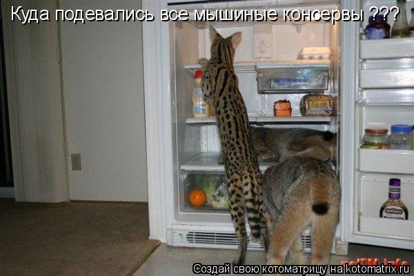 Котоматрица: Куда подевались все мышиные консервы ???