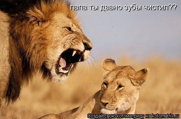 Котоматрица: папа ты давно зубы чистил??