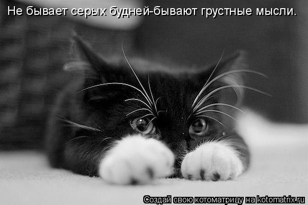 Котоматрица: Не бывает серых будней-бывают грустные мысли.