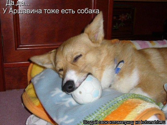 Котоматрица: Да,да... У Аршавина тоже есть собака