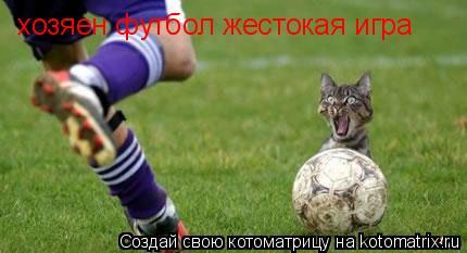 Котоматрица: хозяен футбол жестокая игра