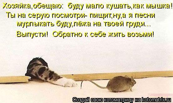 Котоматрица: Хозяйка,обещаю:  буду мало кушать,как мышка! Ты на серую посмотри- пищит,ну,а я песни  мурлыкать буду,лёжа на твоей груди... Выпусти!  Обратно к