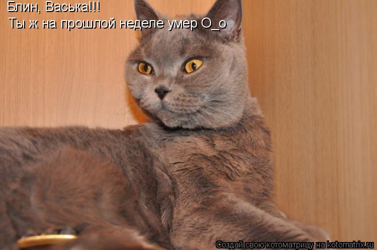 Котоматрица: Блин, Васька!!! Ты ж на прошлой неделе умер О_о