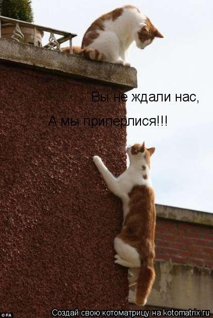 Котоматрица: Вы не ждали нас, А мы приперлися!!!