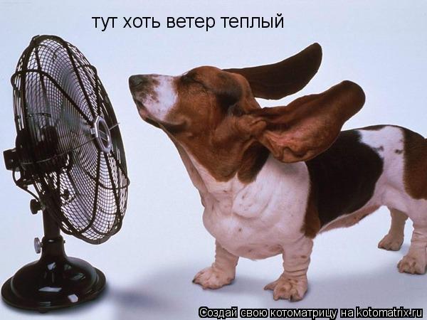 Котоматрица: тут хоть ветер теплый