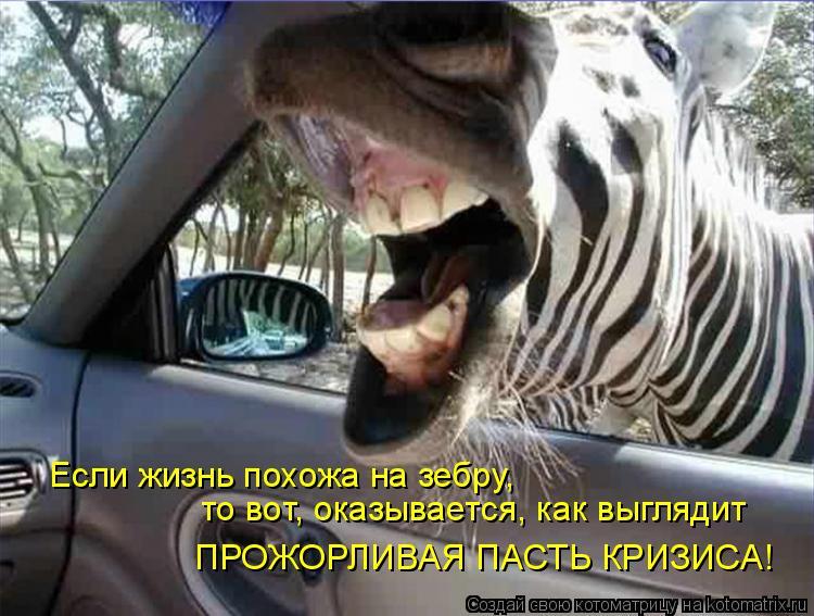 Котоматрица: Если жизнь похожа на зебру, то вот, оказывается, как выглядит ПРОЖОРЛИВАЯ ПАСТЬ КРИЗИСА!