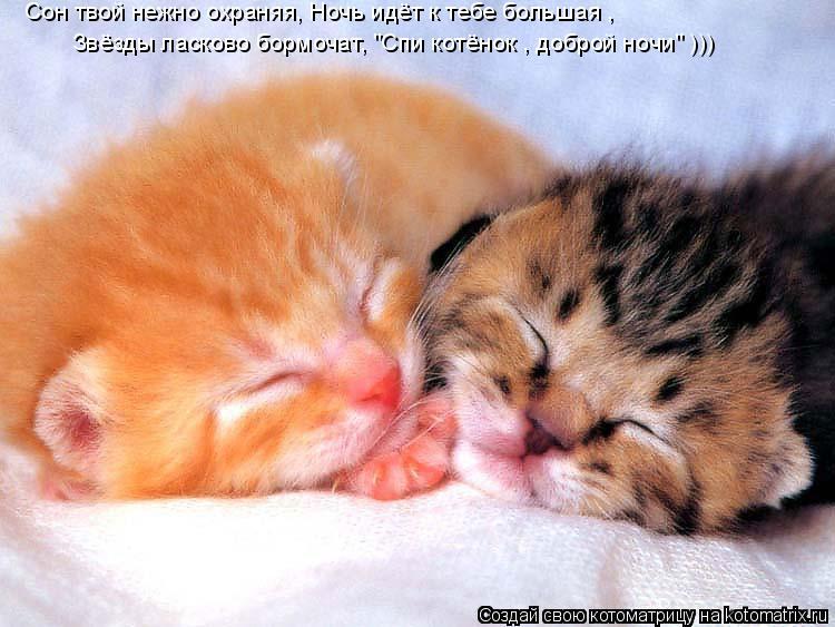 """Котоматрица: Сон твой нежно охраняя, Ночь идёт к тебе большая ,  Звёзды ласково бормочат, """"Спи котёнок , доброй ночи"""" )))"""