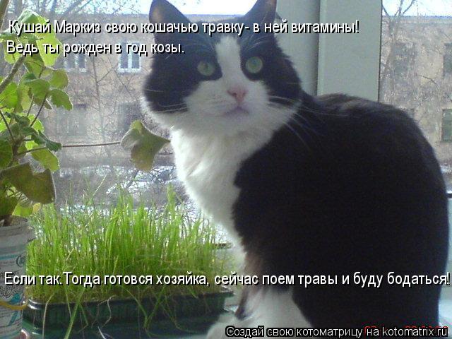 Котоматрица: Кушай Маркиз свою кошачью травку- в ней витамины! Ведь ты рожден в год козы. Если так.Тогда готовся хозяйка, сейчас поем травы и буду бодатьс