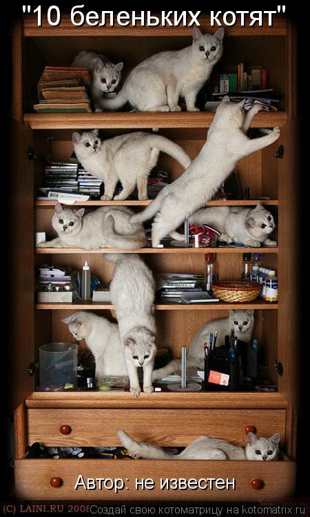"Котоматрица: ""10 беленьких котят"" Автор: не известен"
