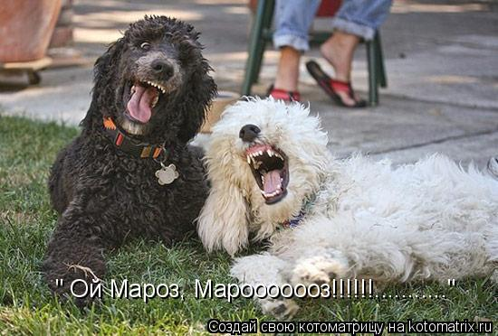 """Котоматрица: """" Ой Мароз, Марооооооз!!!!!!..........."""""""