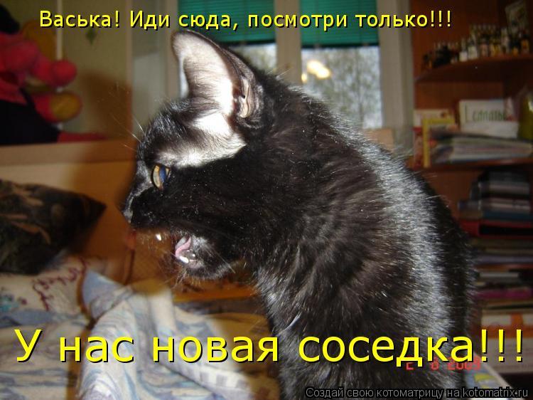 Котоматрица: Васька! Иди сюда, посмотри только!!! У нас новая соседка!!!