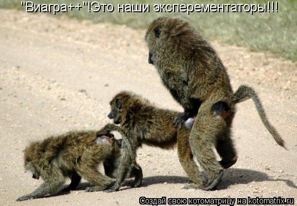 """Котоматрица: """"Виагра++""""!Это наши эксперементаторы!!!"""