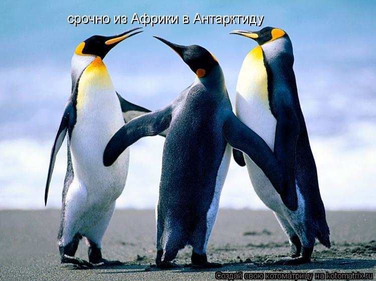 Котоматрица: срочно из Африки в Антарктиду