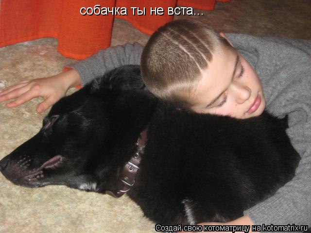Котоматрица: собачка ты не вста...
