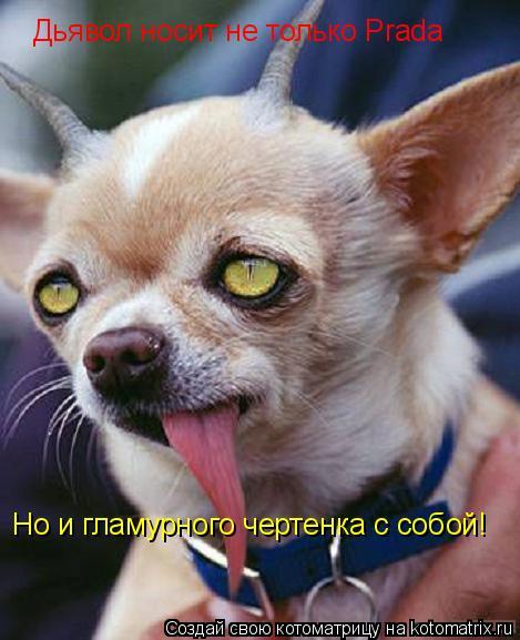 Котоматрица: Дьявол носит не только Prada Но и гламурного чертенка с собой!