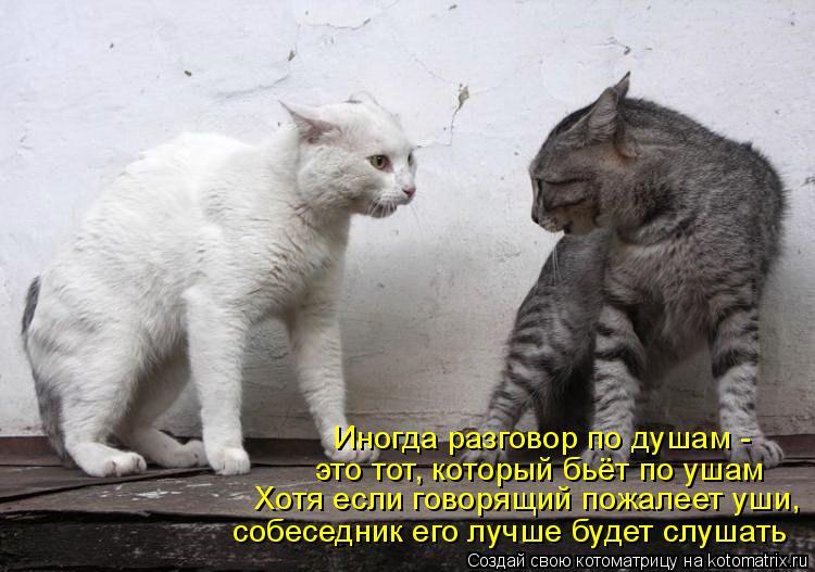 Котоматрица: Иногда разговор по душам -  это тот, который бьёт по ушам Хотя если говорящий пожалеет уши, собеседник его лучше будет слушать