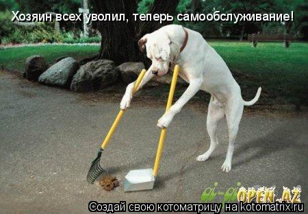 Котоматрица: Хозяин всех уволил, теперь самообслуживание!