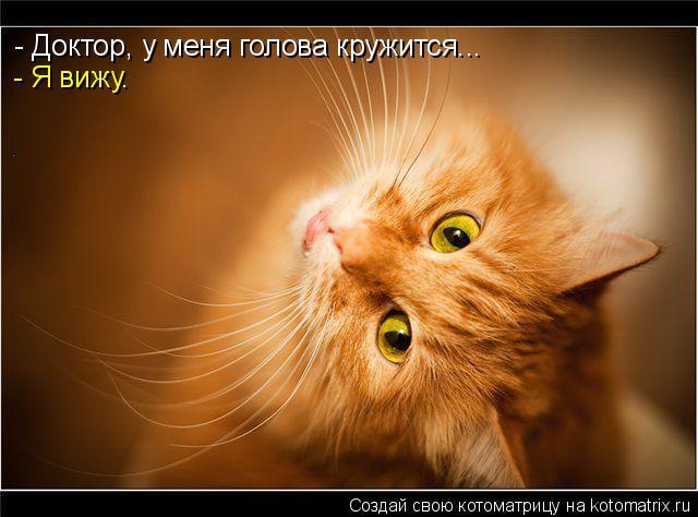 http://kotomatrix.ru/images/lolz/2009/06/03/f9.jpg