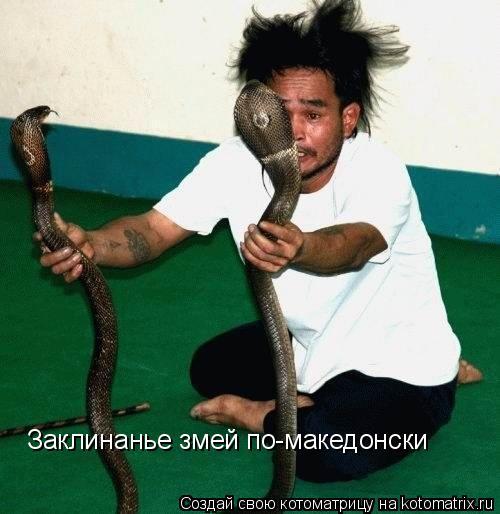 Котоматрица: Заклинанье змей по-македонски