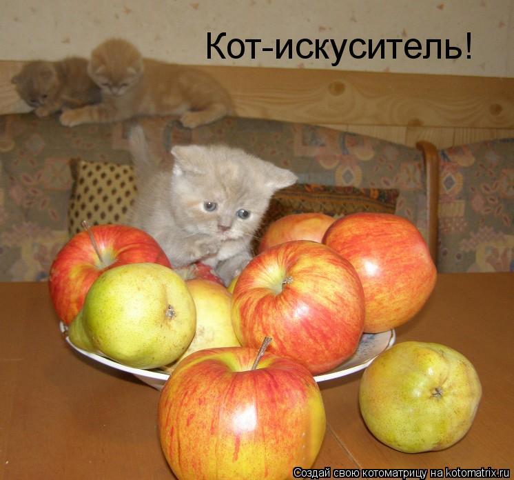 Котоматрица: Кот-искуситель!