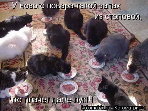 Котоматрица: -У нового повара такой запах   из столовой,  что плачет даже лук!!!