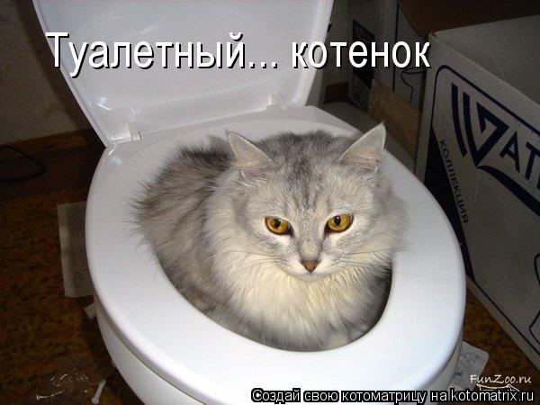 Котоматрица: Туалетный... котенок