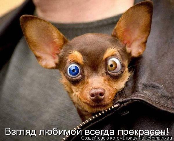 Котоматрица: Взгляд любимой всегда прекрасен!