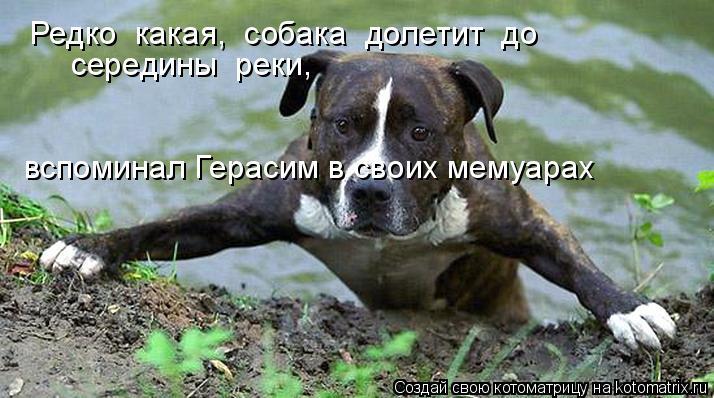 Котоматрица: Редко  какая,  собака  долетит  до  середины  реки,  вспоминал Герасим в своих мемуарах