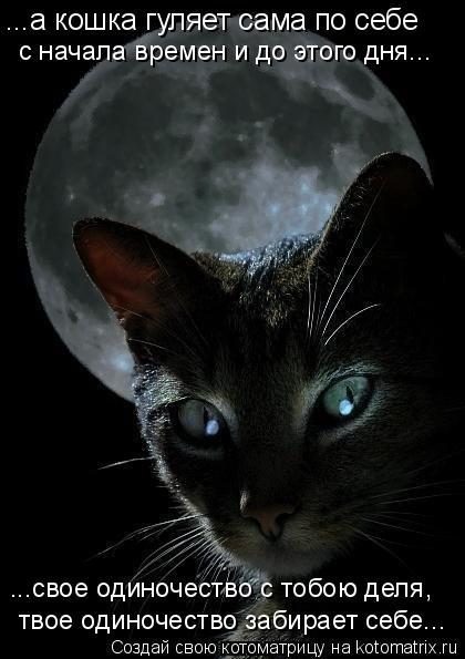 Котоматрица: ...а кошка гуляет сама по себе с начала времен и до этого дня... ...свое одиночество с тобою деля, твое одиночество забирает себе...