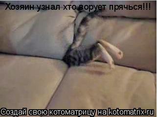Котоматрица: Хозяин узнал хто ворует прячься!!!