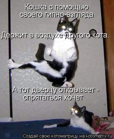 Котоматрица: Кошка с помощью  своего гипно-взгляда Держит в воздухе другого кота. А тот дверцу открывает -  спрятаться хочет